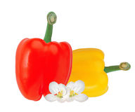 Fresh yellow and red paprika pepper isolated on white Royalty Free Stock Photography