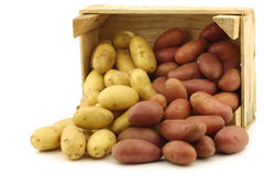 Fresh yellow and red small potatoes Stock Photo