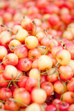 Fresh yellow red sweet cherries macro closeup on market Royalty Free Stock Photography