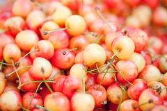 Fresh yellow red sweet cherries macro closeup on market Royalty Free Stock Image