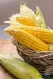 Fresh corn on rustic wooden table, closeup Royalty Free Stock Photos