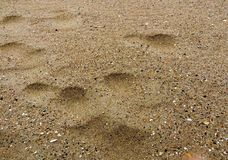 Fresh yellow sea sand Stock Image