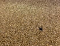 Fresh yellow sea sand Royalty Free Stock Images