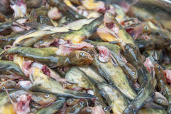 Fresh yellow spicy diced fish Stock Photo