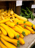 Fresh Yellow Squash Royalty Free Stock Photo