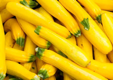 Fresh yellow squash on display Royalty Free Stock Images