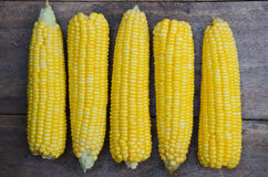Fresh Yellow Sweet Corn. Royalty Free Stock Images