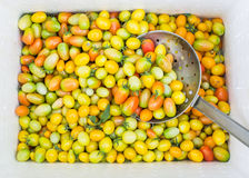 Fresh yellow Tomatoes Stock Photo