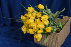 Fresh yellow tulips Royalty Free Stock Photo