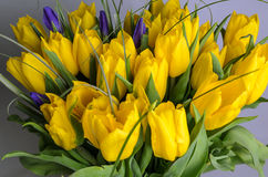 Fresh yellow tulips Stock Image