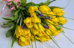 Fresh yellow tulips Royalty Free Stock Image