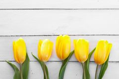 Fresh yellow tulips Royalty Free Stock Images