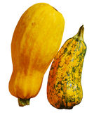 Fresh yellow vegetable marrow Royalty Free Stock Photography