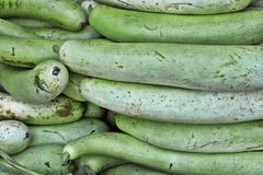 Fresh yellow zucchinis Royalty Free Stock Photography