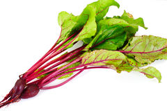 Fresh Young Beets. Sudio Photo Royalty Free Stock Photo