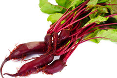 Fresh Young Beets. Sudio Photo Royalty Free Stock Photography