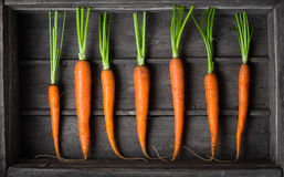 Fresh young carrots Royalty Free Stock Photos