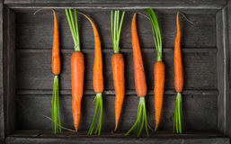 Fresh young carrots Stock Photography