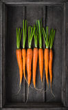 Fresh young carrots Stock Images
