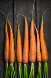 Fresh young carrots Royalty Free Stock Photo