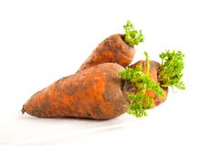 Fresh young carrots with a tops on a white background. Fresh young carrots with a tops on white background Stock Photos