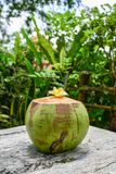 Fresh young coconut royalty free stock photography