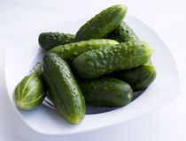 Fresh young cucumber Royalty Free Stock Photos