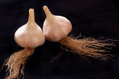 Fresh young garlic Royalty Free Stock Photos