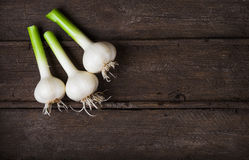 Fresh young garlic Stock Images