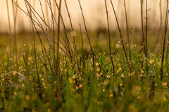 Fresh young grass Royalty Free Stock Photo