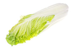 Fresh young green chinese cabbage isolated on white background Royalty Free Stock Image