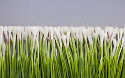 Fresh young green onions Royalty Free Stock Images