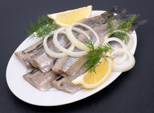 Fresh young herring Royalty Free Stock Image