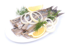 Fresh young herring Stock Photography