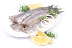 Fresh young herring Stock Photo