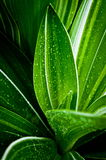 Fresh young plant and water drops on leaf Stock Images