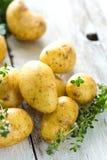 Fresh young potatoes Stock Photos