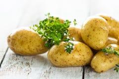 Fresh young potatoes Stock Image