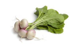 Fresh young small turnips Stock Image