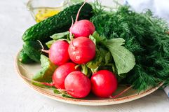 Fresh young vegetables for healthy salad. Radishes cucumbers dil. L spices and oil on a plate. White stone background Royalty Free Stock Image