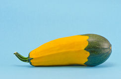 Fresh zucchini on azure background Stock Images