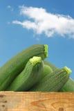 Fresh zucchini's (Cucurbita pepo) Royalty Free Stock Photo