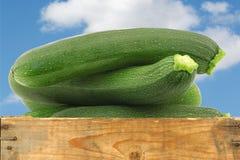 Fresh zucchini's (Cucurbita pepo) Stock Photos