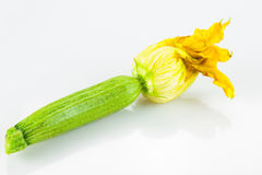 Fresh Zucchini on white Royalty Free Stock Photo