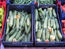 Fresh Zucchinis Royalty Free Stock Photo