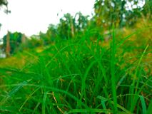 Freshes grass. This is a beautyfull colour of grass on the ground with the pure green colour Stock Photography