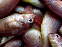Freshest Fish. Beautiful fresh fish in pastel shades for sale in a fish market Royalty Free Stock Photography