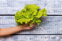 The freshest lettuce. Stock Images