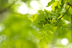 Freshgreen,greenleaf Stock Photos