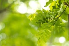 Freshgreen, greenleaf Photos stock
